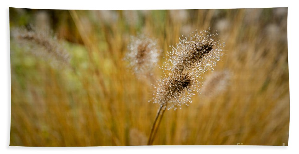 Dew Hand Towel featuring the photograph Dew On Ornamental Grass No. 4 by Belinda Greb