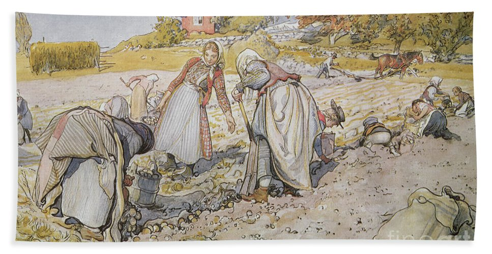 Agriculture; Farm; Farming; Work; Labor; Labour; Worker; Female; Field; Rural; Countryside; Agricultural Hand Towel featuring the painting Digging Potatoes by Carl Larsson