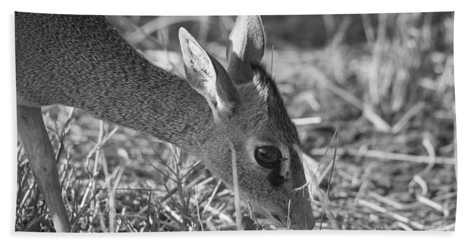 2012 Hand Towel featuring the photograph Dik Dik Close-up by Howard Kennedy