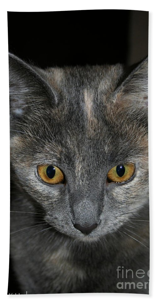 Cat Hand Towel featuring the photograph Dilute Tortishell by Susan Herber
