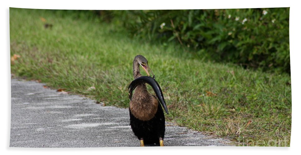 Anhinga Hand Towel featuring the photograph Dinner For One by Christiane Schulze Art And Photography