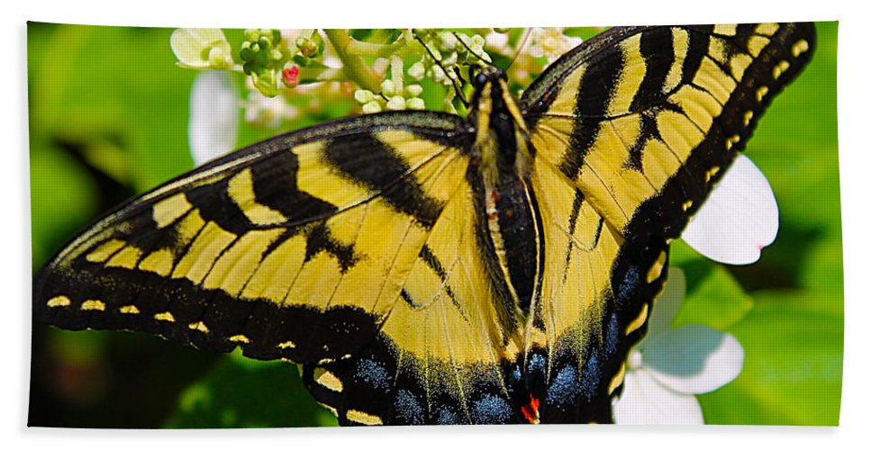 Butterflies Bath Sheet featuring the photograph Dinner For The Swallowtail by Nina Silver