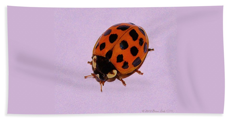 Ladybug Hand Towel featuring the photograph Dinner Guest by Brian Tada