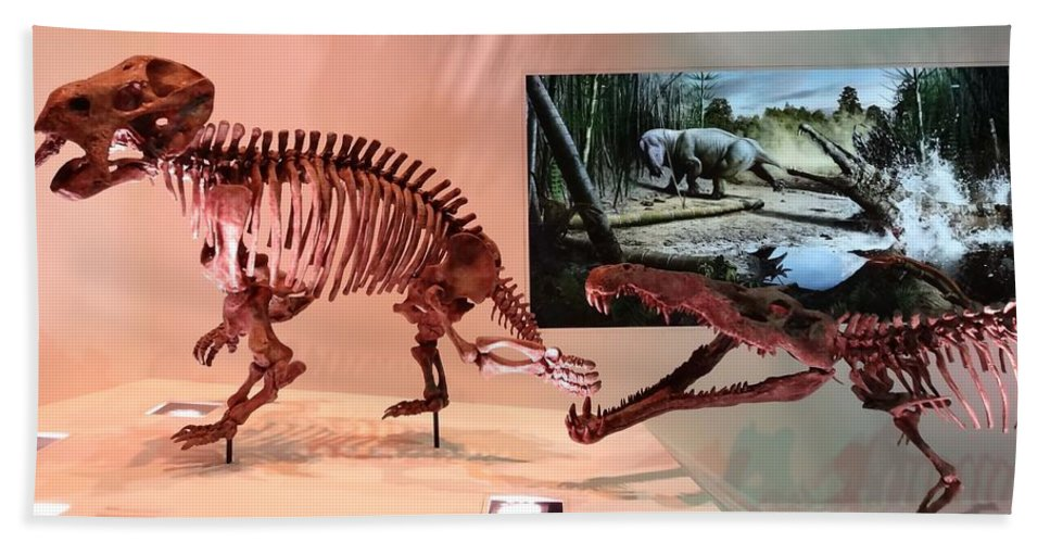 Age Of The Dinosaur Bath Sheet featuring the photograph Dinosaur Fossils by Dan Sproul