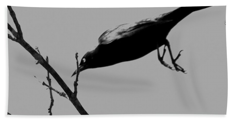 Grackle Bath Sheet featuring the photograph Dive Bombing by Joe Faherty