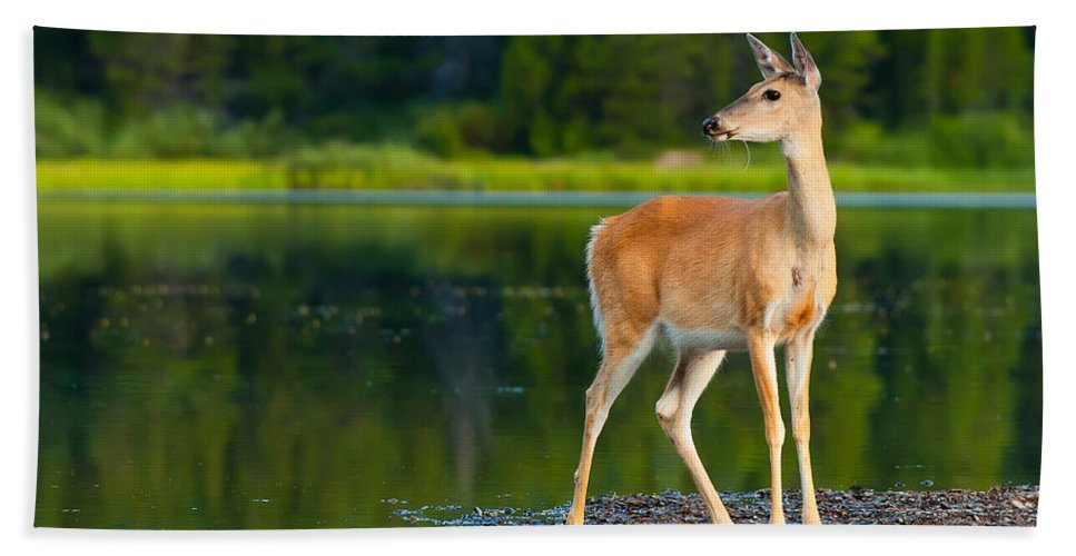 Animal Hand Towel featuring the photograph Doe by Sebastian Musial