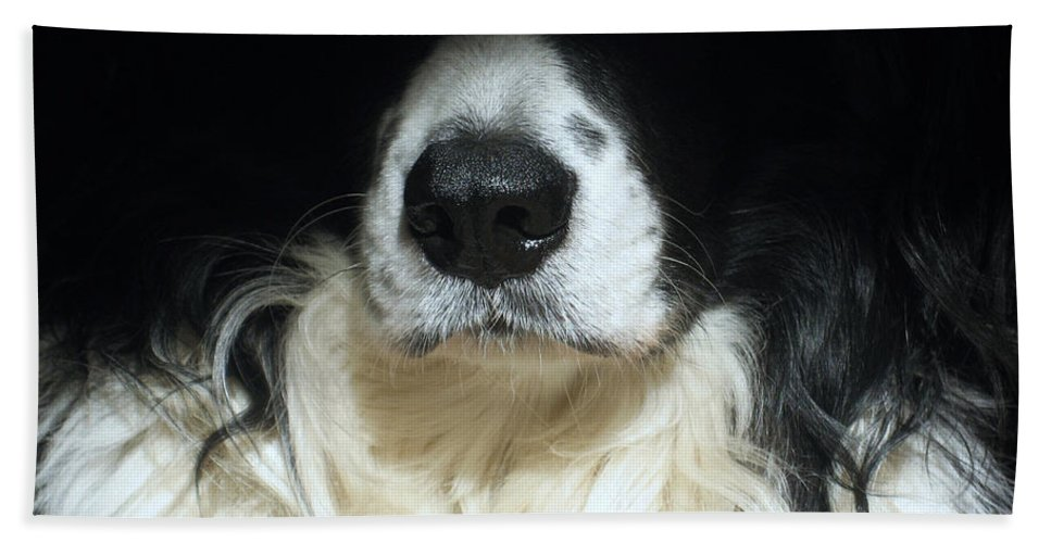 Black Hand Towel featuring the photograph Dog Close Up by Steve Ball