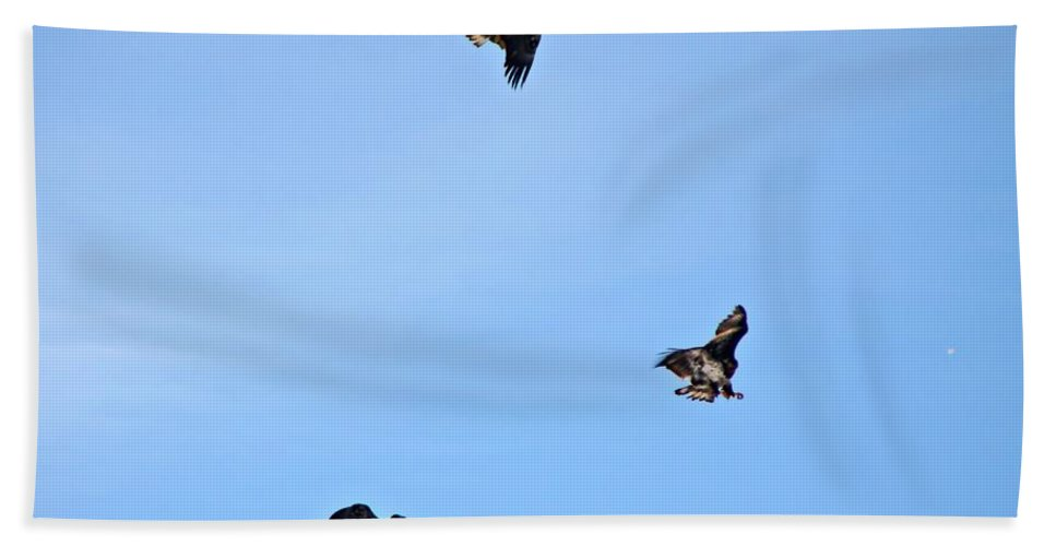 Eagles Bath Sheet featuring the photograph Dog Fight by Marcelo Albuquerque