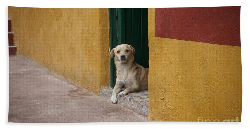Guanajuato Hand Towel featuring the photograph Dog In Colorful Mexican City by John Shaw