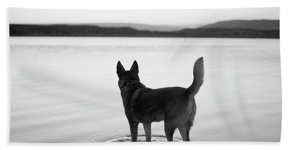 Abiquiu Bath Sheet featuring the photograph Dog Looking Over Abiquiu Reservior by Ryan Heffernan