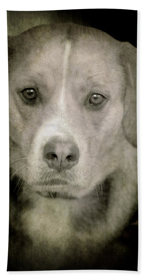 Loriental Hand Towel featuring the photograph Dog Posing by Loriental Photography