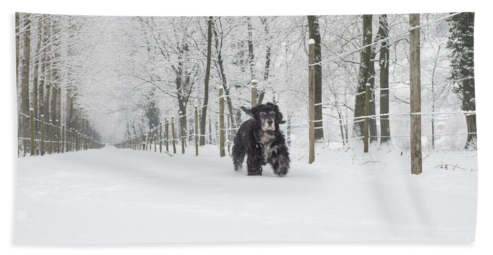 Snow Hand Towel featuring the photograph Dog Running In The Snow by Mats Silvan