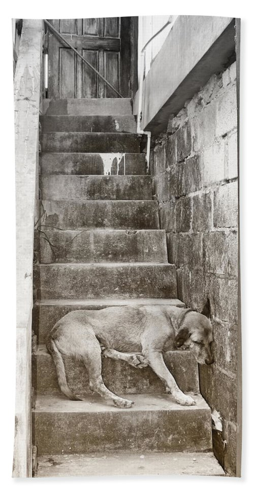 Dog Hand Towel featuring the photograph Dog Tired by Debby Richards