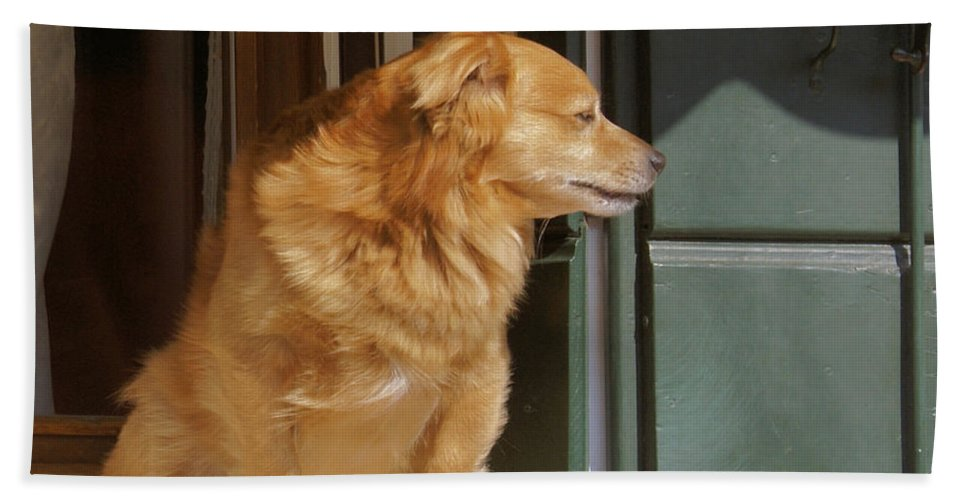 Dog Hand Towel featuring the photograph Doggie In The Window by Ron Harpham