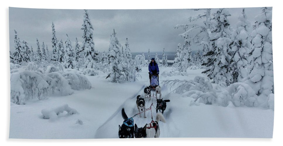 Working Animals Hand Towel featuring the photograph Dogsledding Through The Forest by Johnathan Ampersand Esper