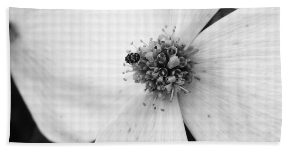 Flower Hand Towel featuring the photograph Dogwood Black And White 2 by Andrea Anderegg