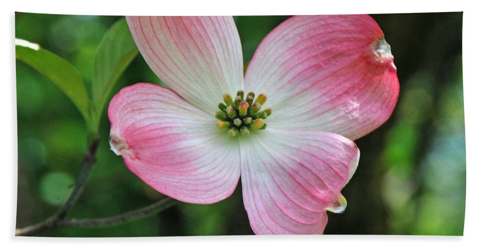 Dogwood Bath Sheet featuring the photograph Dogwood Blosssom by Richard Bryce and Family