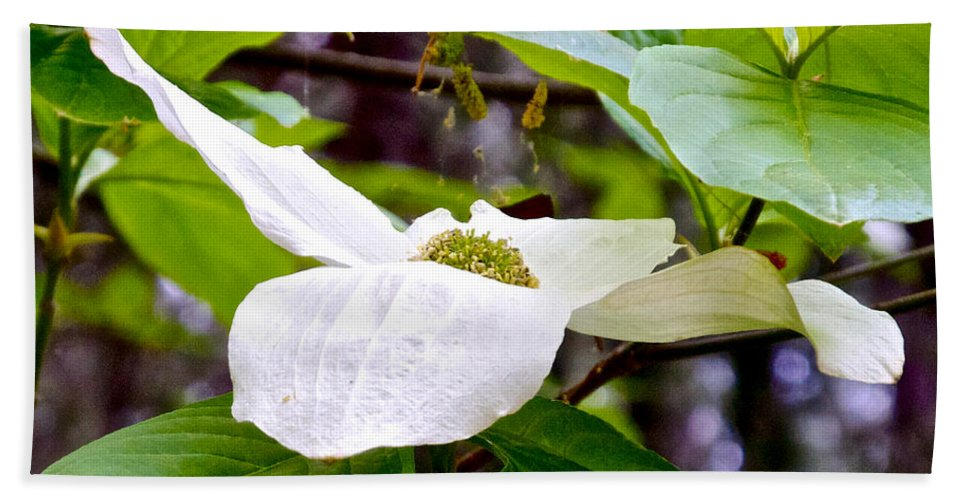 Dogwood Bath Sheet featuring the photograph Dogwood In Yosemite Valley-2013 by Ruth Hager