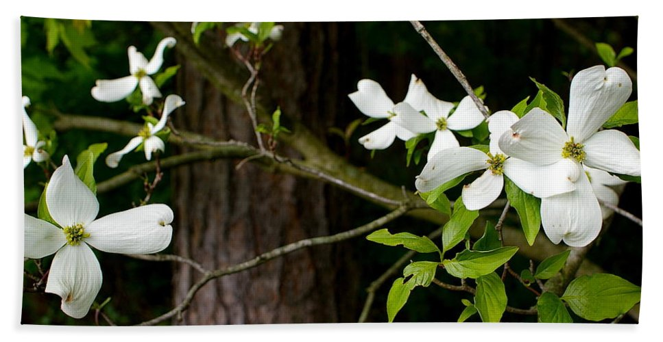 Flowers Bath Sheet featuring the photograph Dogwood by Randy Pollard