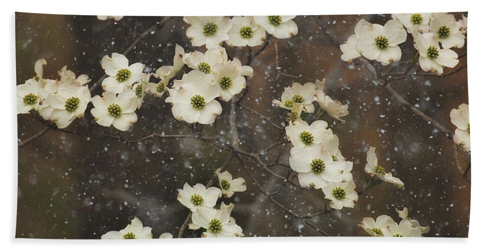Dogwood Trees Bath Sheet featuring the photograph Dogwood Winter by Mel Hensley