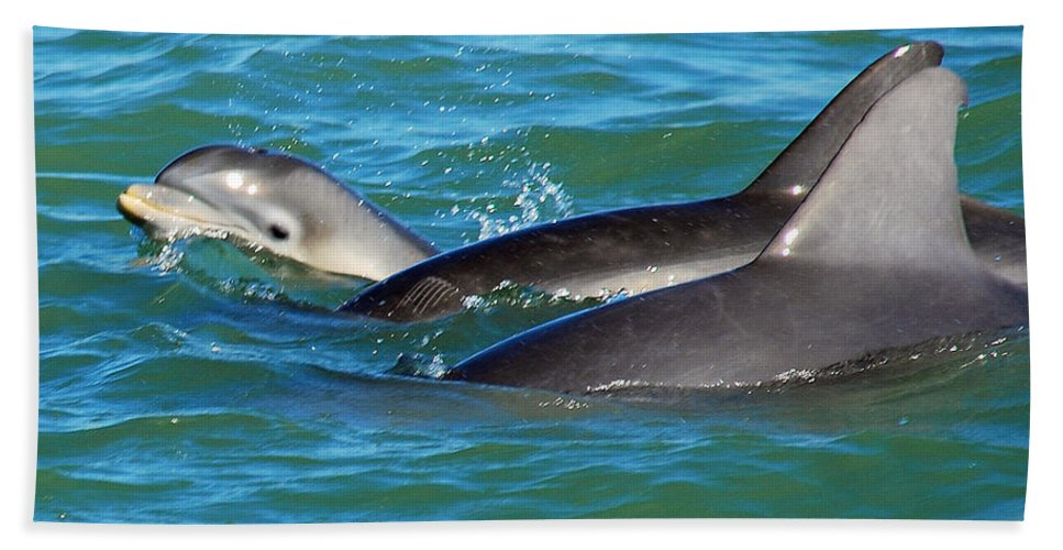 Dolphins Bath Sheet featuring the photograph Dolphins by Stephen Whalen