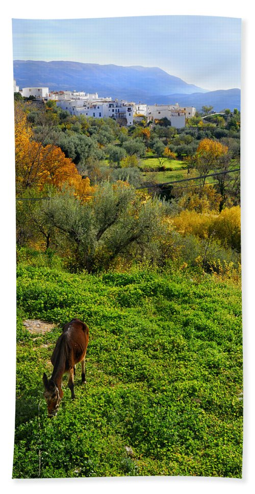 Historic Streets Bath Sheet featuring the photograph Donkey by Guido Montanes Castillo