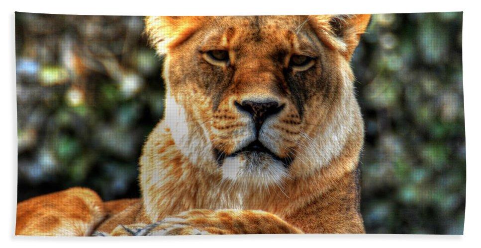 Lion Bath Sheet featuring the photograph Don't Blink... by Michael Frank Jr
