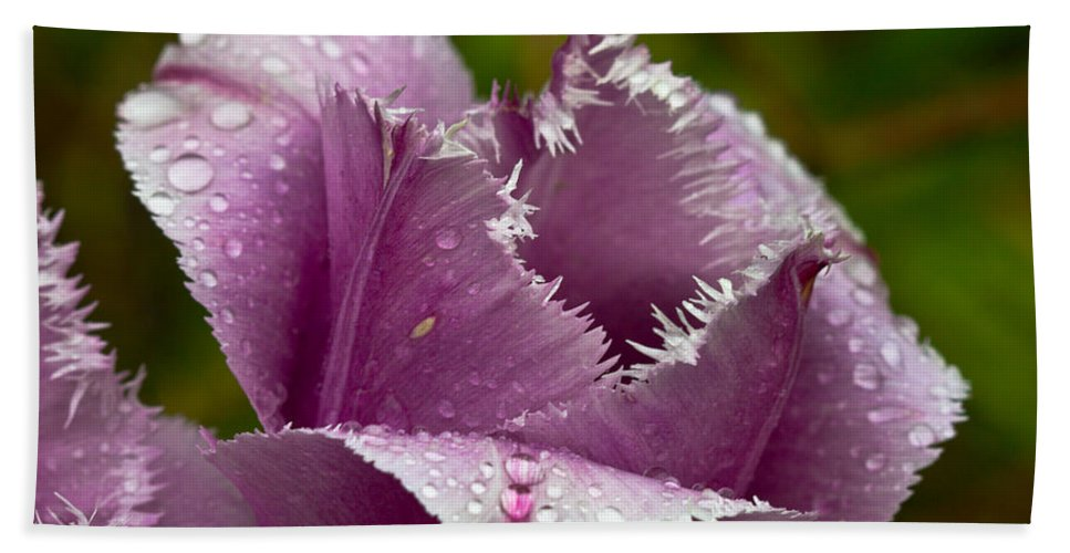 Tulip Bath Sheet featuring the photograph Dont Call Me A Monster Just Because I Have Teeth Purple Tulip by Eti Reid