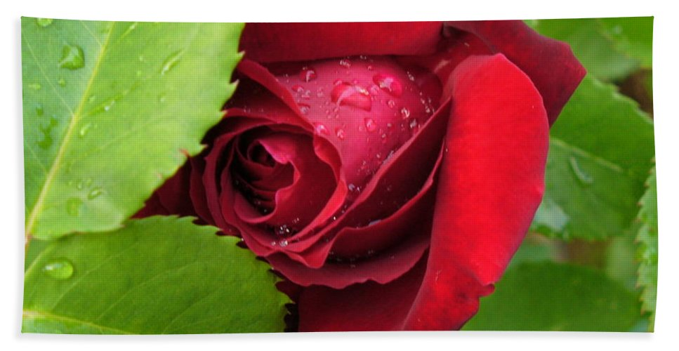 Rose Hand Towel featuring the photograph Don't Cry For Me Rosanna by Lingfai Leung