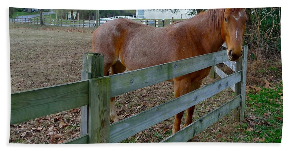 Horse Hand Towel featuring the photograph Don't Fence Me In by Denise Mazzocco