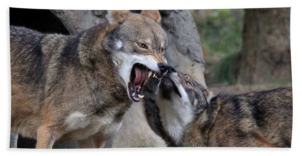 Wolves Hand Towel featuring the photograph Don't Mess With Me by Athena Mckinzie