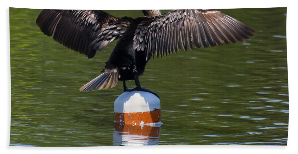 Class Room Posters Hand Towel featuring the digital art Double Crested Cormorant by Chris Flees