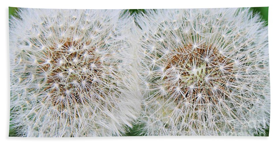 Double Dandelion Bath Sheet featuring the photograph Double Dandelion Wishes by Barbara Griffin