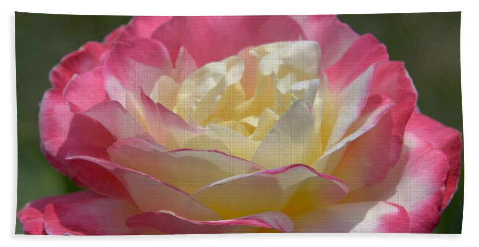 Rose Hand Towel featuring the photograph Double Delight by Terri Winkler