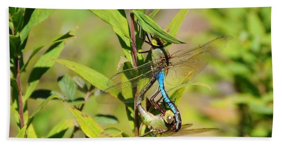 Dragonfly Bath Sheet featuring the photograph Double Dragon by Al Powell Photography USA