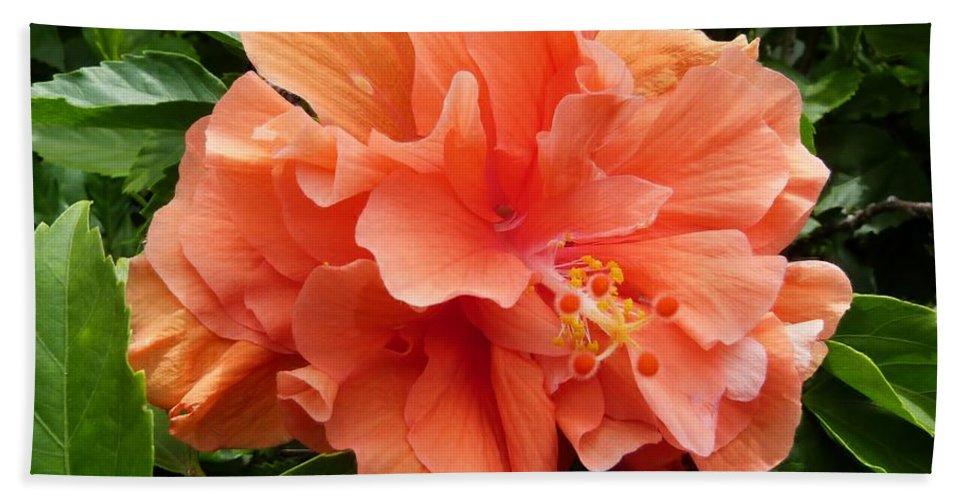 Double Peach Hibiscus Bath Sheet featuring the photograph Double Peach Hibiscus by Amar Sheow