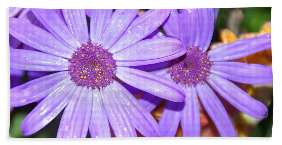 Flower Hand Towel featuring the photograph Double Purple by Aimee L Maher ALM GALLERY