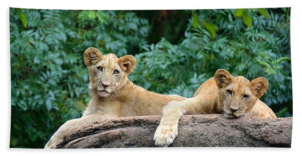Lions Hand Towel featuring the photograph Double Trouble by Lisa L Silva