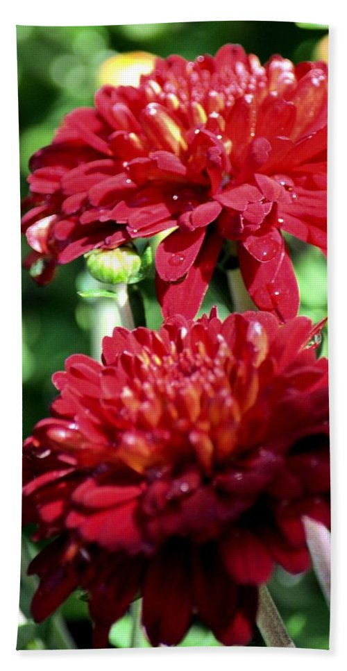 Doubled Red Mums Hand Towel featuring the photograph Doubled Red Mums by Maria Urso