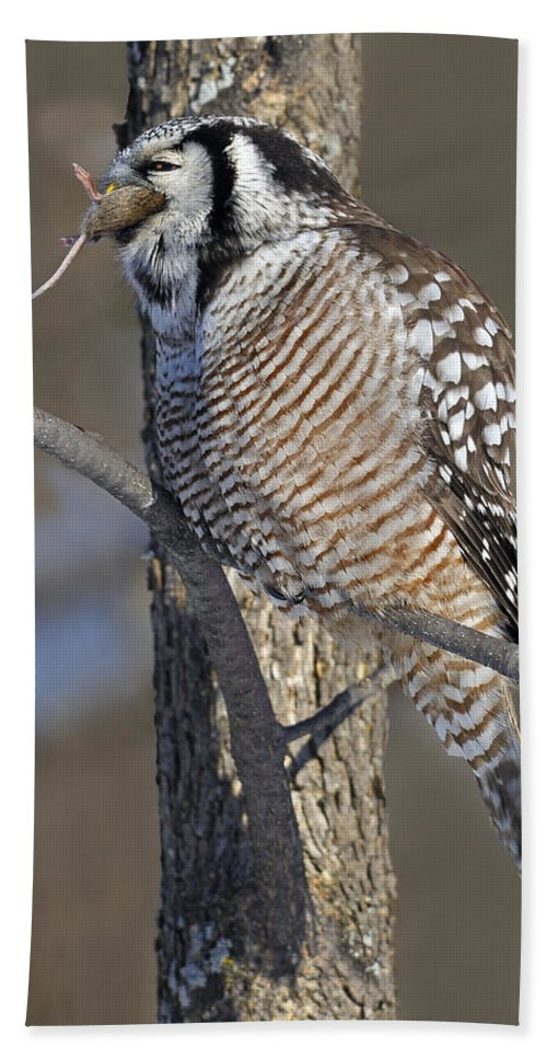 Northern Hawk-owl Bath Sheet featuring the photograph Down The Hatch by Tony Beck