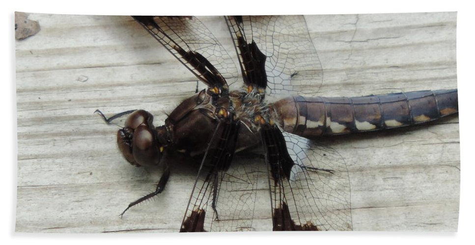 Beauty Dragon Fly Bath Sheet featuring the photograph Dragon Fly Closeup by Bill Tomsa