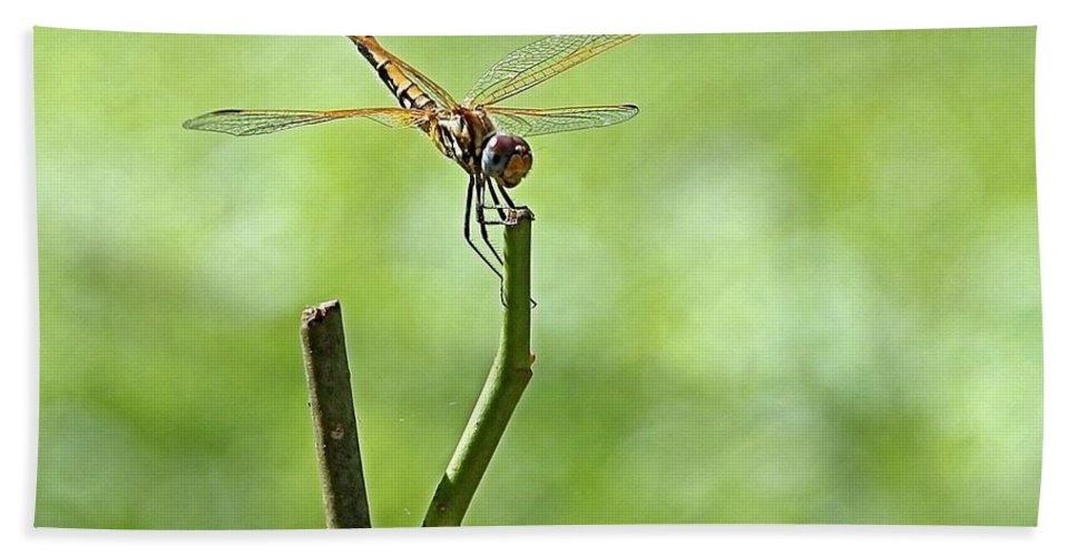 Dragon Fly Hand Towel featuring the photograph Dragon Fly by Martin Michael Pflaum