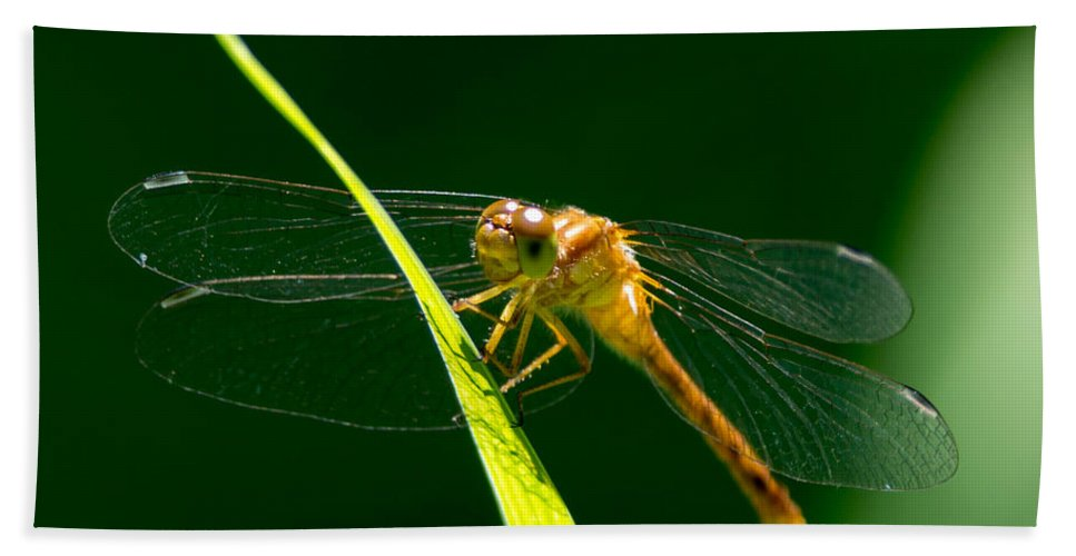 Insect Bath Sheet featuring the photograph Dragon Fly On Grass by Richard Kitchen