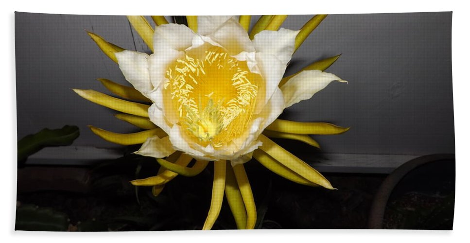 Flowers Hand Towel featuring the photograph Dragon Fruit Blooming At Night I by Jussta Jussta