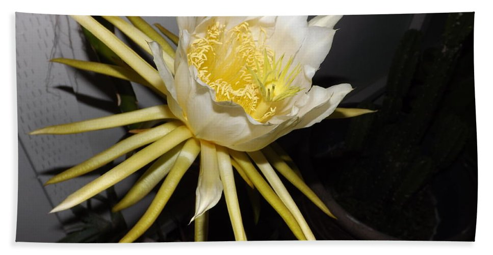 Flower Hand Towel featuring the photograph Dragon Fruit Blossom II by Jussta Jussta