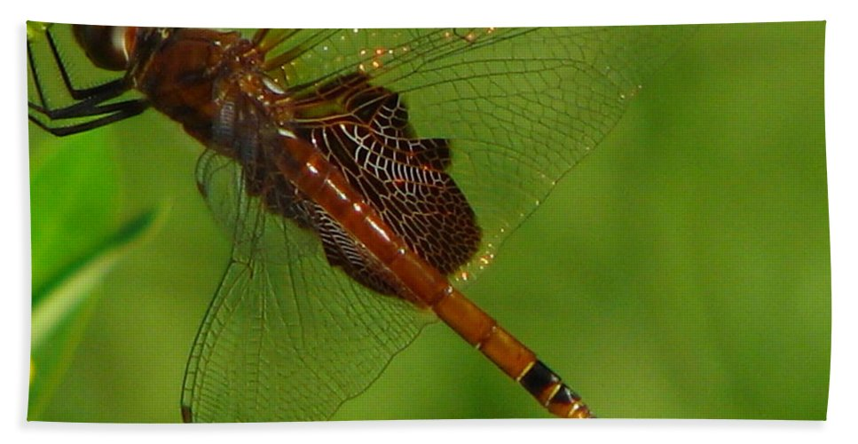 Art For The Wall...patzer Photographydragonfly Hand Towel featuring the photograph Dragonfly Art 2 by Greg Patzer