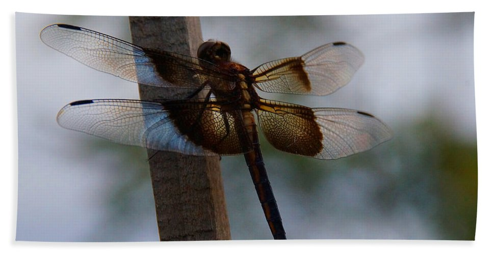 Dragonfly Bath Sheet featuring the photograph Dragonfly At Rest by Mick Anderson