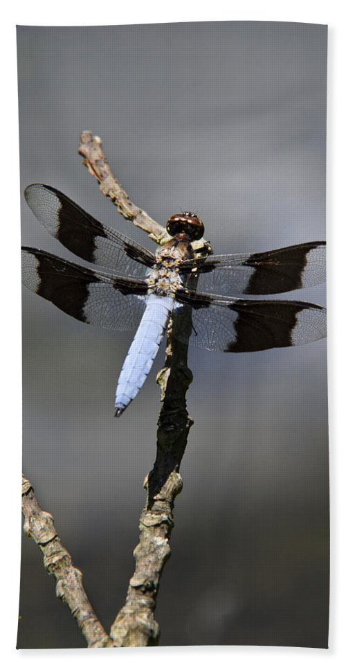 Dragonfly Hand Towel featuring the photograph Dragonfly Common Whitetail by Christina Rollo