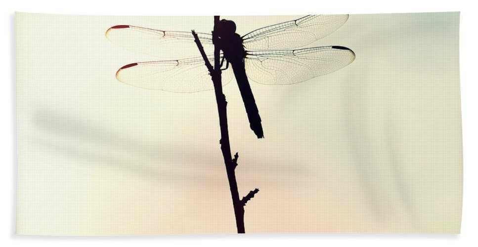 Florida Hand Towel featuring the photograph Dragonfly II by Chris Andruskiewicz