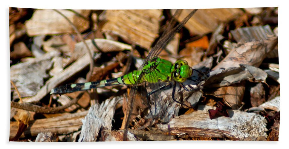 Green Bath Sheet featuring the photograph Dragonfly In Mulch by Stephen Whalen
